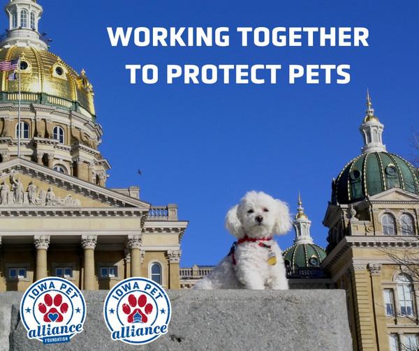 $1 Donation to Iowa Pet Alliance Foundation